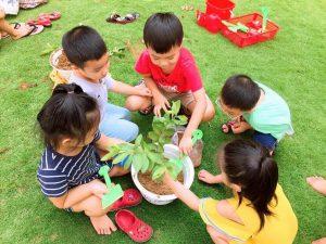 Trường mầm non quốc tế quận 9 sunflower 3